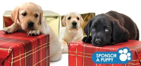 Psy przewodniki - guide dog puppies